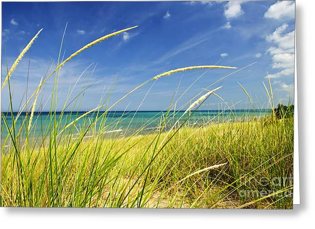 Peaceful Water Greeting Cards - Sand dunes at beach Greeting Card by Elena Elisseeva