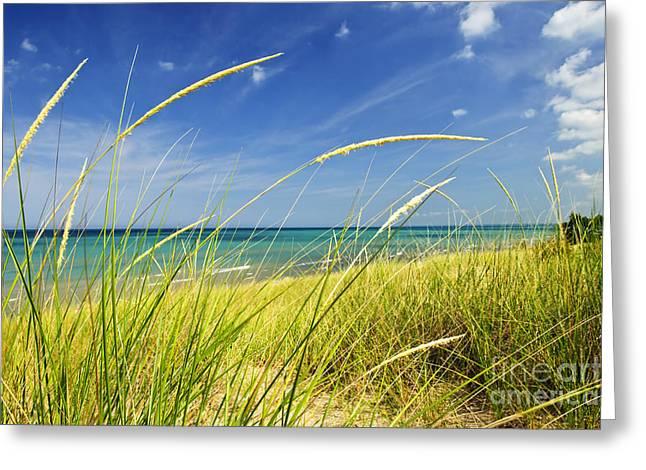 Sand dunes at beach Greeting Card by Elena Elisseeva