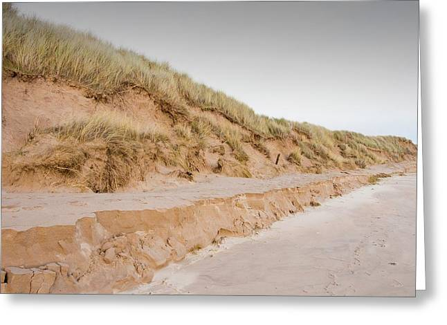 Sand Dunes At Beadnell Greeting Card by Ashley Cooper
