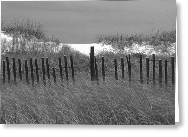 Sand Dunes Greeting Card by Don Spenner