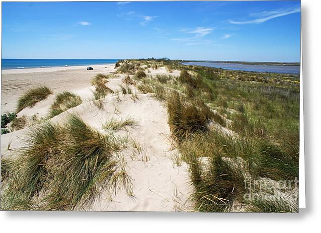 Tranquil Scene Escapism Greeting Cards - Sand dunes separation Greeting Card by Sami Sarkis