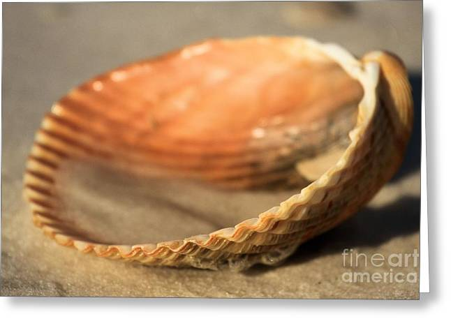 Colored Shell Greeting Cards - Sand In The Clam Greeting Card by Adam Jewell