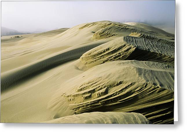 Sand Patterns Created By The Wind Greeting Card by Robert L. Potts