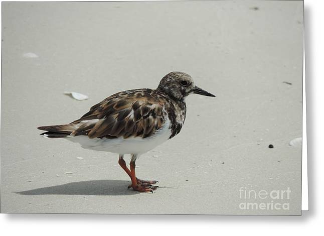 On The Beach Greeting Cards - Sand pied piper Greeting Card by Luke George