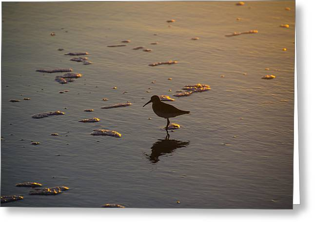 Sand Piper Greeting Cards - Sand Piper at Sunrise Greeting Card by Bill Cannon