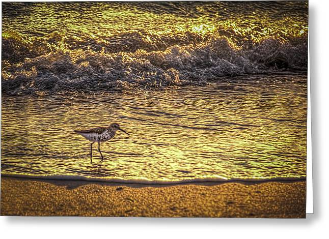 Sand Piper Greeting Card by Marvin Spates