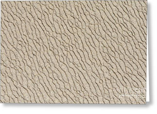 Recently Sold -  - China Cove Greeting Cards - Sand Skin Greeting Card by Artist and Photographer Laura Wrede
