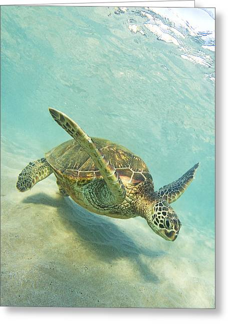 ; Maui Greeting Cards - Sand Surfing Greeting Card by James Roemmling