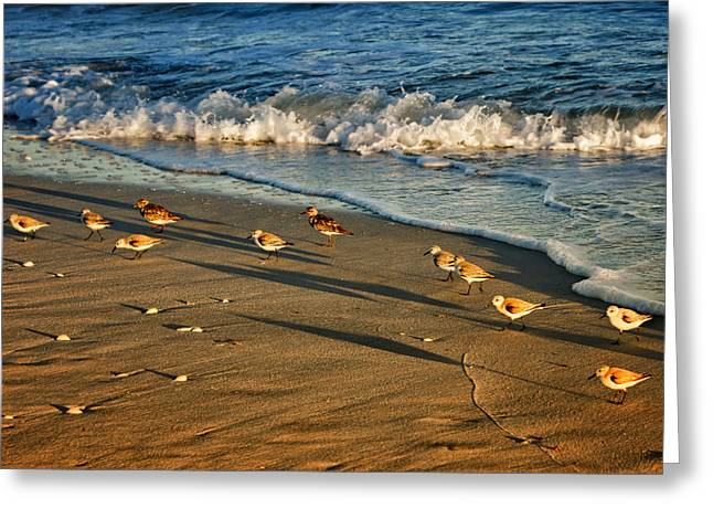 Sandpiper Greeting Cards - Sanderling Sunset Greeting Card by Nikolyn McDonald