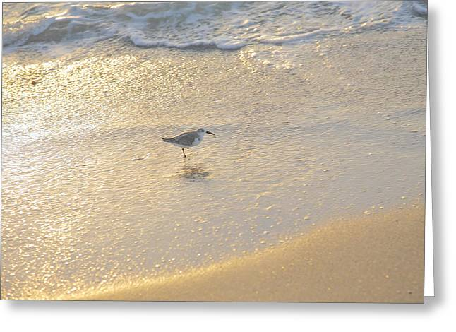 Captiva Greeting Cards - Sanderling With Prize Greeting Card by Steven Ainsworth