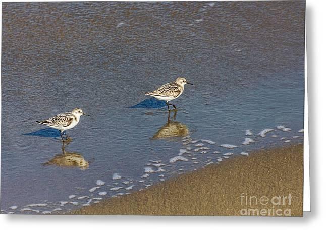 San Francisco Bay Greeting Cards - Sanderlings Greeting Card by Kate Brown