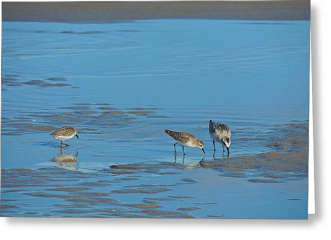 Love The Animal Greeting Cards - Sanderlings Greeting Card by Marcia Lee Jones