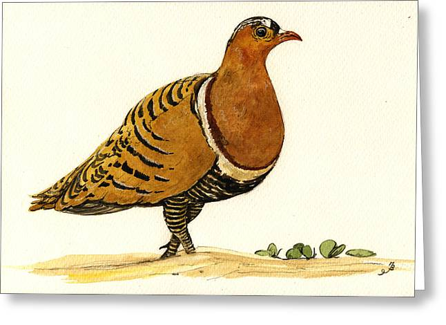 Nature Study Paintings Greeting Cards - Sandgrouse Greeting Card by Juan  Bosco