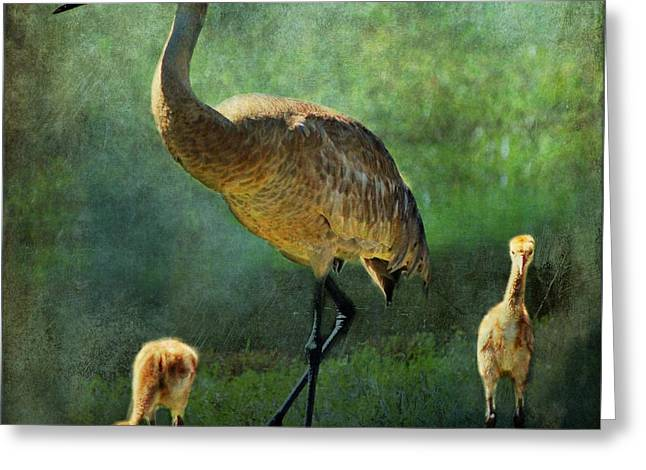 Sandhill Cranes Paintings Greeting Cards - Sandhill and Chicks Greeting Card by Barbara Chichester