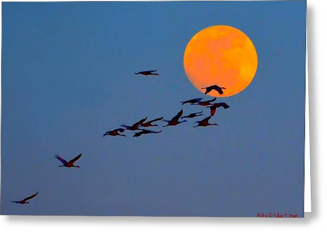 Indiana Migration Path Greeting Cards - Sandhill Crane Migration Greeting Card by Julie Dant