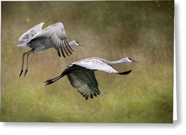 Sandhill Crane Greeting Cards - Sandhill Cranes 2 Greeting Card by Angie Vogel