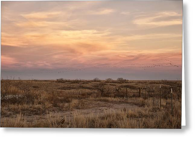 Best Seller Greeting Cards - Sandhill Cranes at Sunset Greeting Card by Melany Sarafis