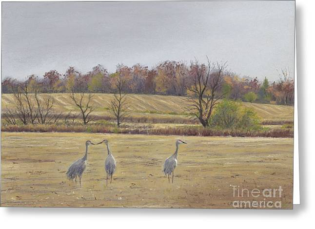 Sandhill Cranes Feeding In Field  Greeting Card by Jymme Golden
