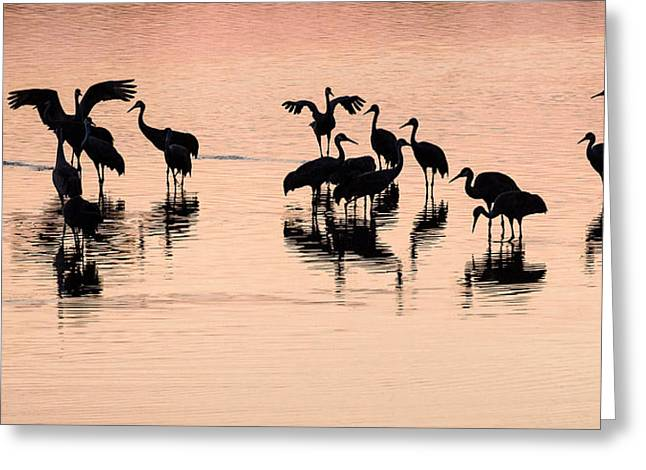 Cranes In Florida Greeting Cards - Sandhill Cranes in Sunset Silhouette - Floridas Viera Wetlands Greeting Card by Bill Swindaman