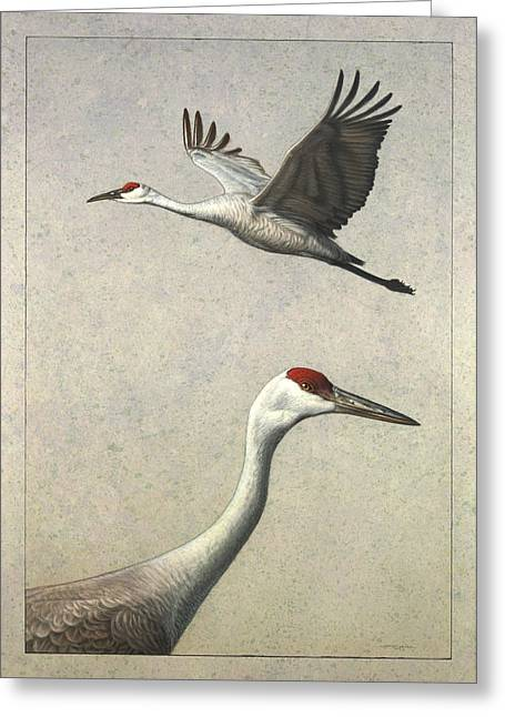 Flying Drawings Greeting Cards - Sandhill Cranes Greeting Card by James W Johnson