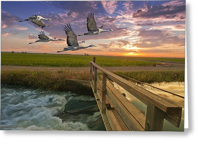 Sandhill Cranes Greeting Cards - Sandhill cranes over rice fields Greeting Card by Ron Schwager