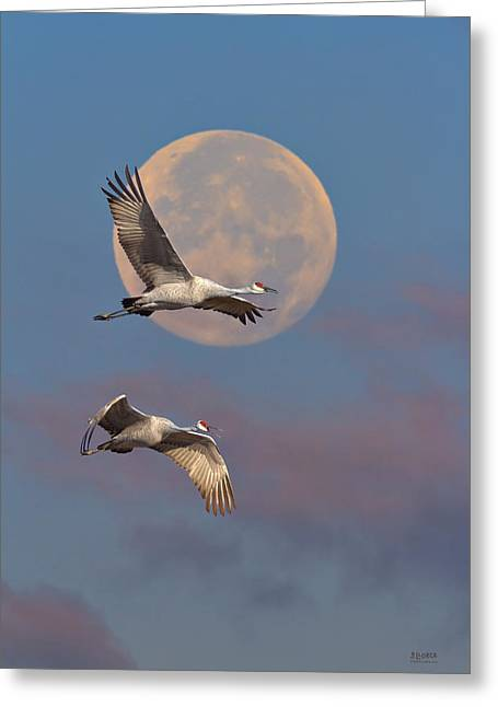 Sandhill Cranes Greeting Cards - Sandhill Cranes Passing The Moon In The Morning Greeting Card by Steven Llorca