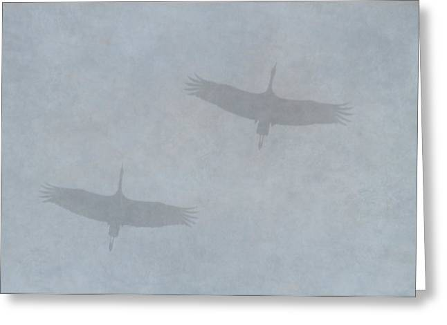 Sillouette Greeting Cards - Sandhill Silhouettes Greeting Card by Angie Vogel