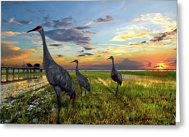 Crane Greeting Cards - Sandhill Sunset Greeting Card by Debra and Dave Vanderlaan