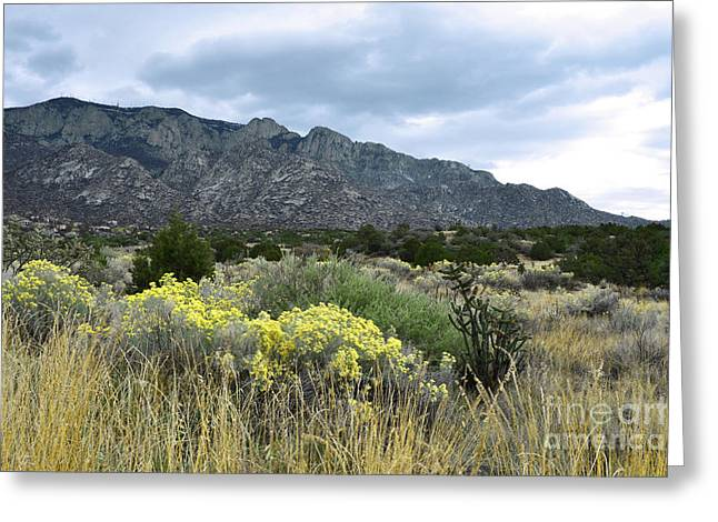 Sandia Mountains Greeting Cards - Sandia Mountain Autumn Wildflowers Greeting Card by Andrea Hazel Ihlefeld