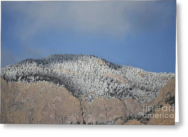 Sandias Greeting Cards - Sandia Mountains Snow Pines Greeting Card by Andrea Hazel Ihlefeld