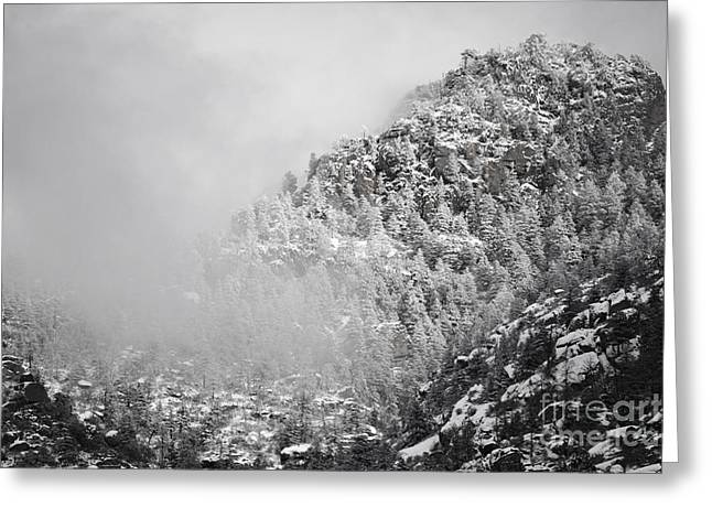 Sandias Greeting Cards - Sandia Mountains Winter Storm Pines Greeting Card by Andrea Hazel Ihlefeld