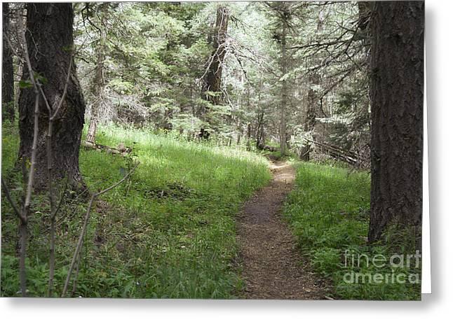 Sandias Greeting Cards - Sandia Woodland Trail Greeting Card by Andrea Hazel Ihlefeld
