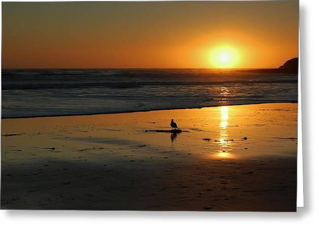 Sandpiper At Natural Bridges Santa Cruz Greeting Card by Garnett  Jaeger