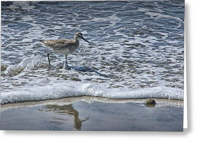 Sand Piper Greeting Cards - Sandpiper at Waters Edge Greeting Card by Randall Nyhof