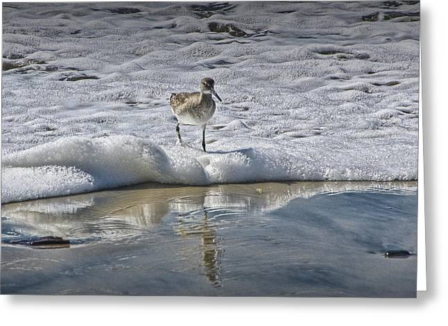 Sand Piper Greeting Cards - Sandpiper in the Surf on the beach at Torrey Pines State Beach No. 1330 Greeting Card by Randall Nyhof