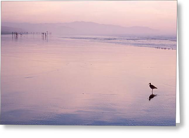 California Beach Image Greeting Cards - Sandpiper On The Beach, San Francisco Greeting Card by Panoramic Images