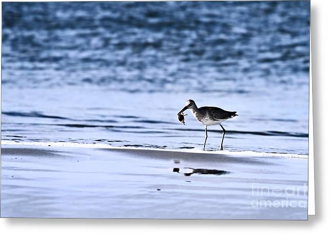 Sandpiper Greeting Card by Stephanie Frey