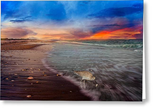 Spotted Shells Greeting Cards - Sandpiper Sunrise Greeting Card by Betsy A  Cutler