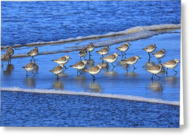 Sandpiper Symmetry Greeting Card by Robert Bynum