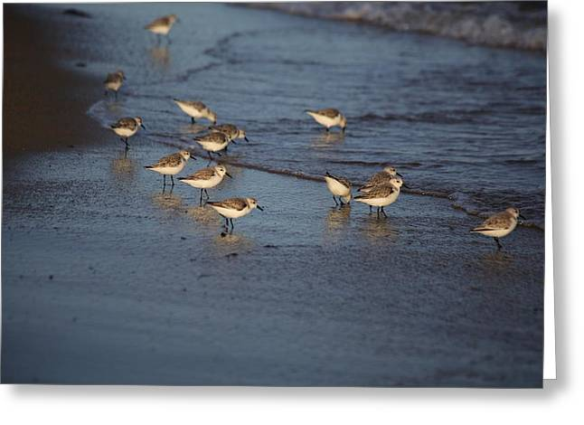 Sandpipers 5 Greeting Card by Allan Morrison