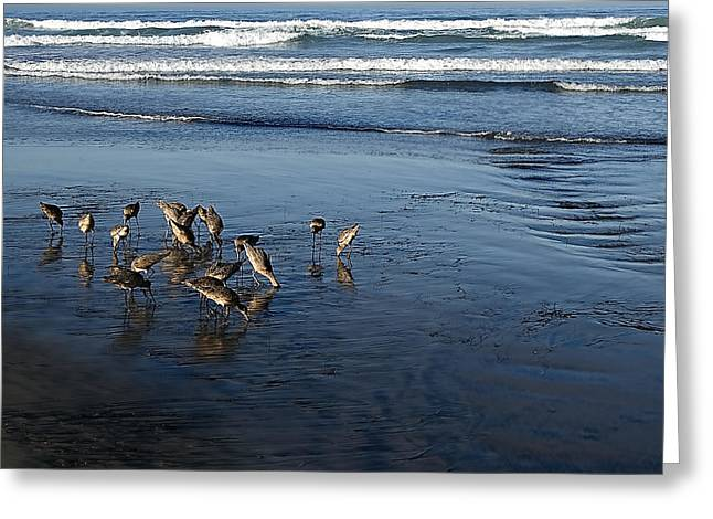 California Sea Lions Greeting Cards - Sandpipers Piping Greeting Card by See My  Photos