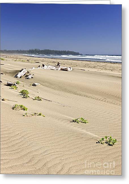 Sandy Beach On Pacific Ocean In Canada Greeting Card by Elena Elisseeva