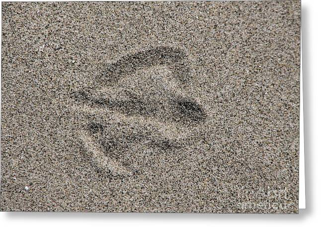 Bird Footprints In The Sand Greeting Cards - Sandy Seagull Step Greeting Card by Rose Santuci-Sofranko