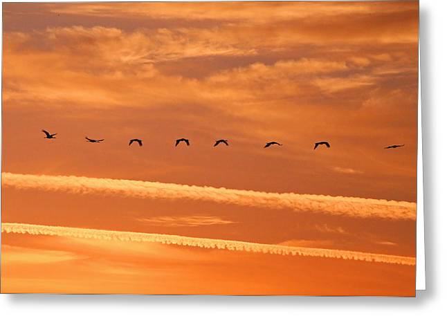 Sonny Bono Greeting Cards - Sandhill Crane sunset Greeting Card by Renee Owens