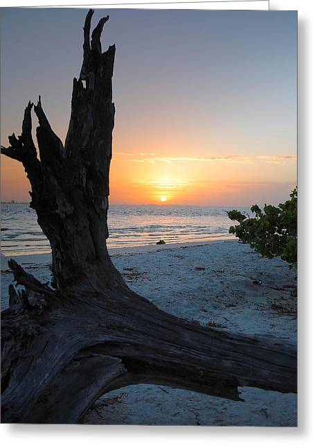 Driftwood Greeting Cards - Sanibel Sunrise II Greeting Card by Steven Ainsworth