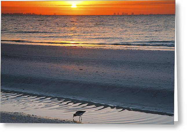 Sand Piper Greeting Cards - Sanibel Sunrise IV Greeting Card by Steven Ainsworth