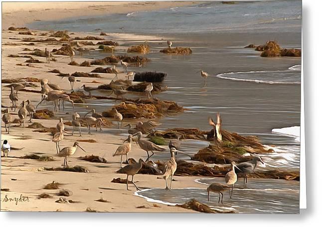 Sand Piper Greeting Cards - Santa Barbara Harbor Birds Greeting Card by Barbara Snyder