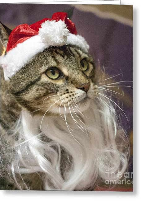 One Animal Greeting Cards - Santa Cat Greeting Card by Juli Scalzi