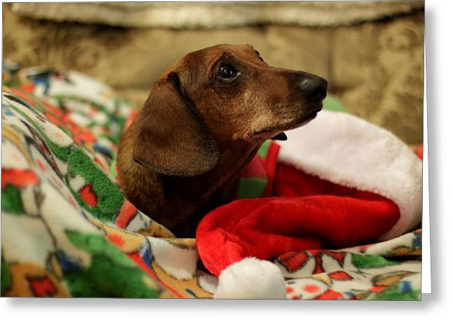 Weiner Dog Greeting Cards - Santa Claus Greeting Card by Scott Hill