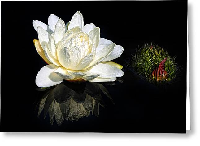 Victoria Cruziana Greeting Cards - Santa Cruz Water platter Greeting Card by Dave Mills